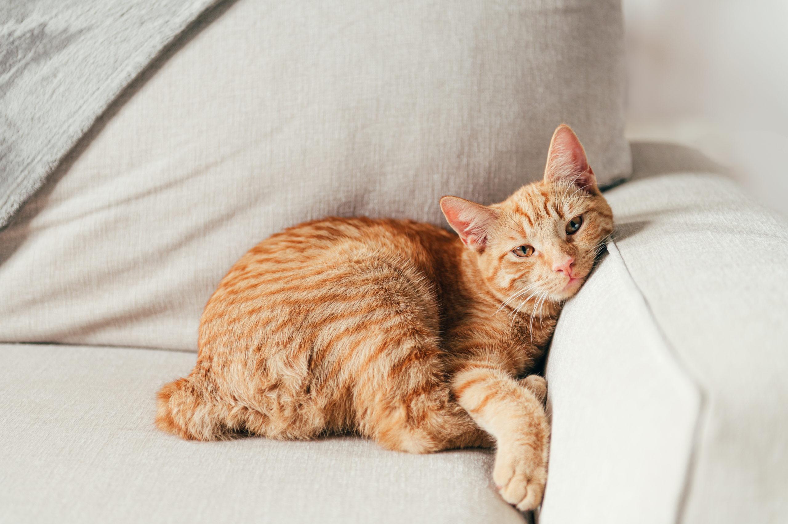 Was kostet eine Katze? Wenig angesichts dessen, was sie dem Menschen schenkt.